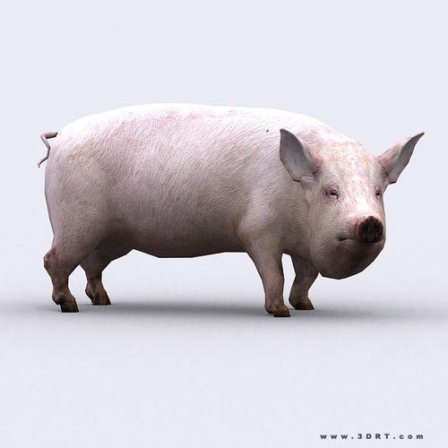 3DRT - Pig3D model