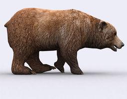 3DRT - Wild Bear  3D Model