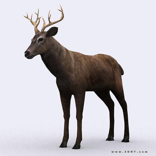 3DRT - Deer3D model