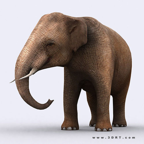 3DRT - Elephant3D model