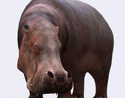 3DRT - Hippopotamus  3D Model