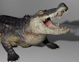 Alligator 3D Model