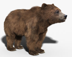Brown Bear FUR 3D Model