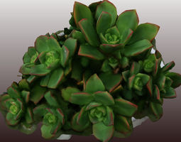 Kleinia plant 3D scan - Low Polygon game-ready