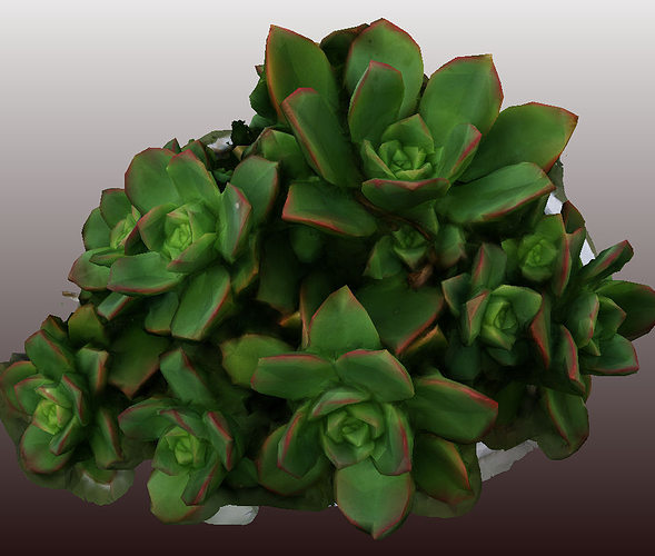 kleinia plant 3d scan - low polygon  3d model low-poly obj 1