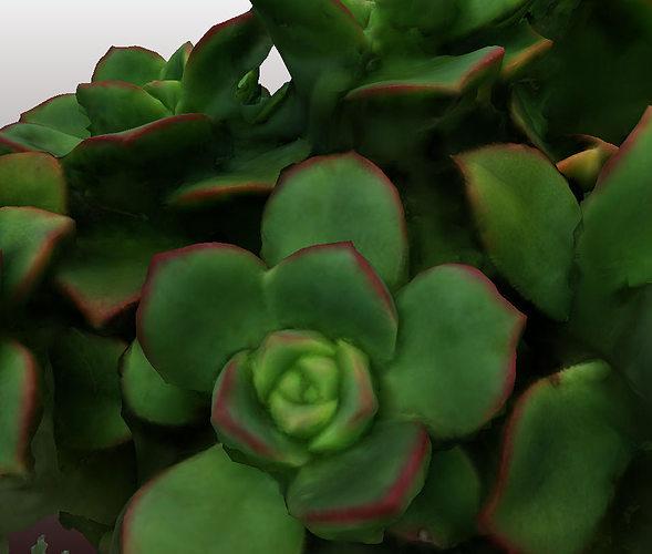 kleinia plant 3d scan - hd version 3d model obj 1