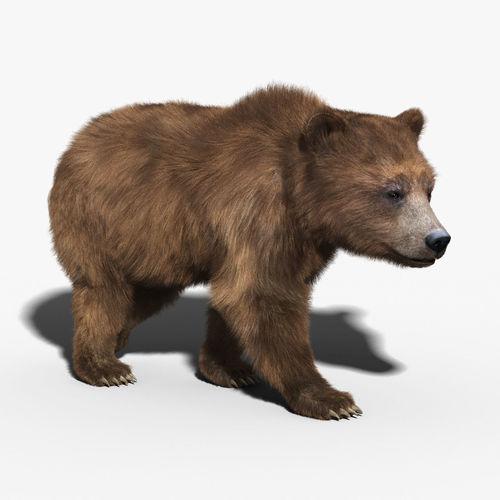 Brown Bear FUR RIGGED3D model
