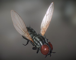Animated Housefly 3D model