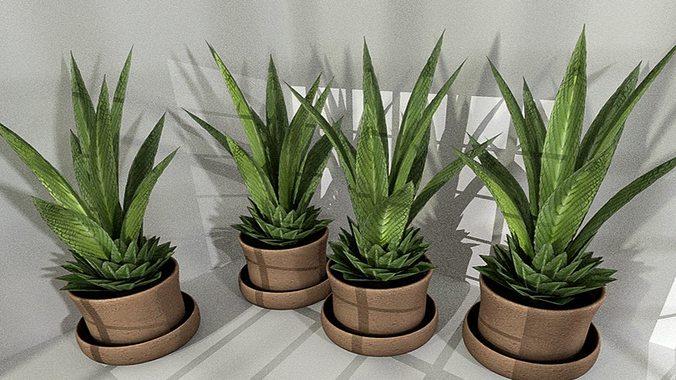 indoor pot plant 3 low-poly 3d model low-poly obj 3ds fbx dxf stl blend 1