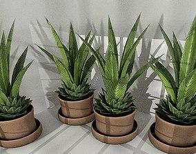 3D asset Indoor Pot Plant 3 Low-Poly