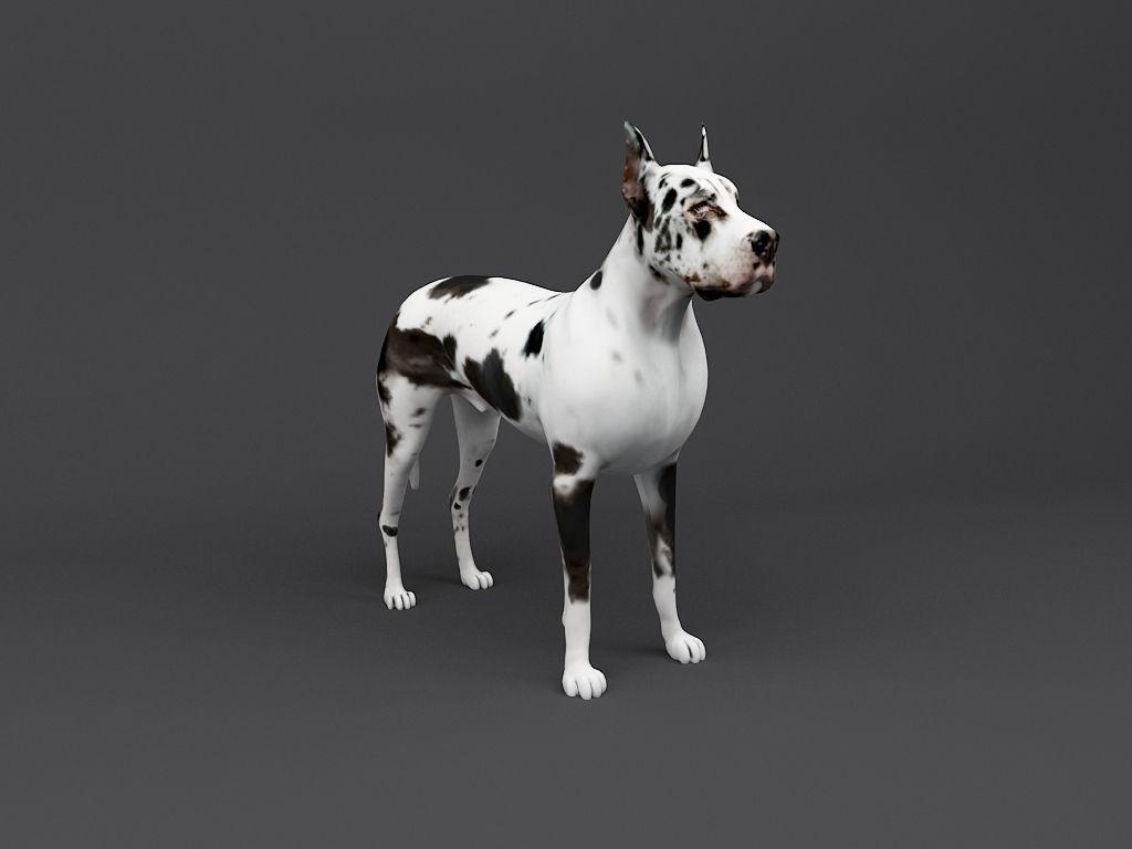 Great Dane 3d Print Ready Dog Model 3d Model 3d Printable