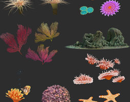 3D coral collection