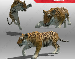 3D asset Tiger Animated