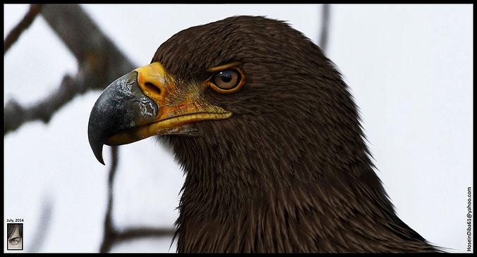 eagle 3d model  3d model obj mtl ztl tga 1