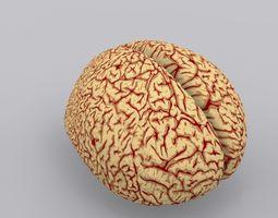 human brain 2 3d model max obj 3ds fbx mtl
