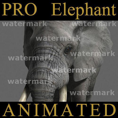 pro elephant animated - 3d model 3d model rigged animated max obj fbx mtl 1