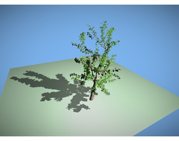 leaf tree 3D asset