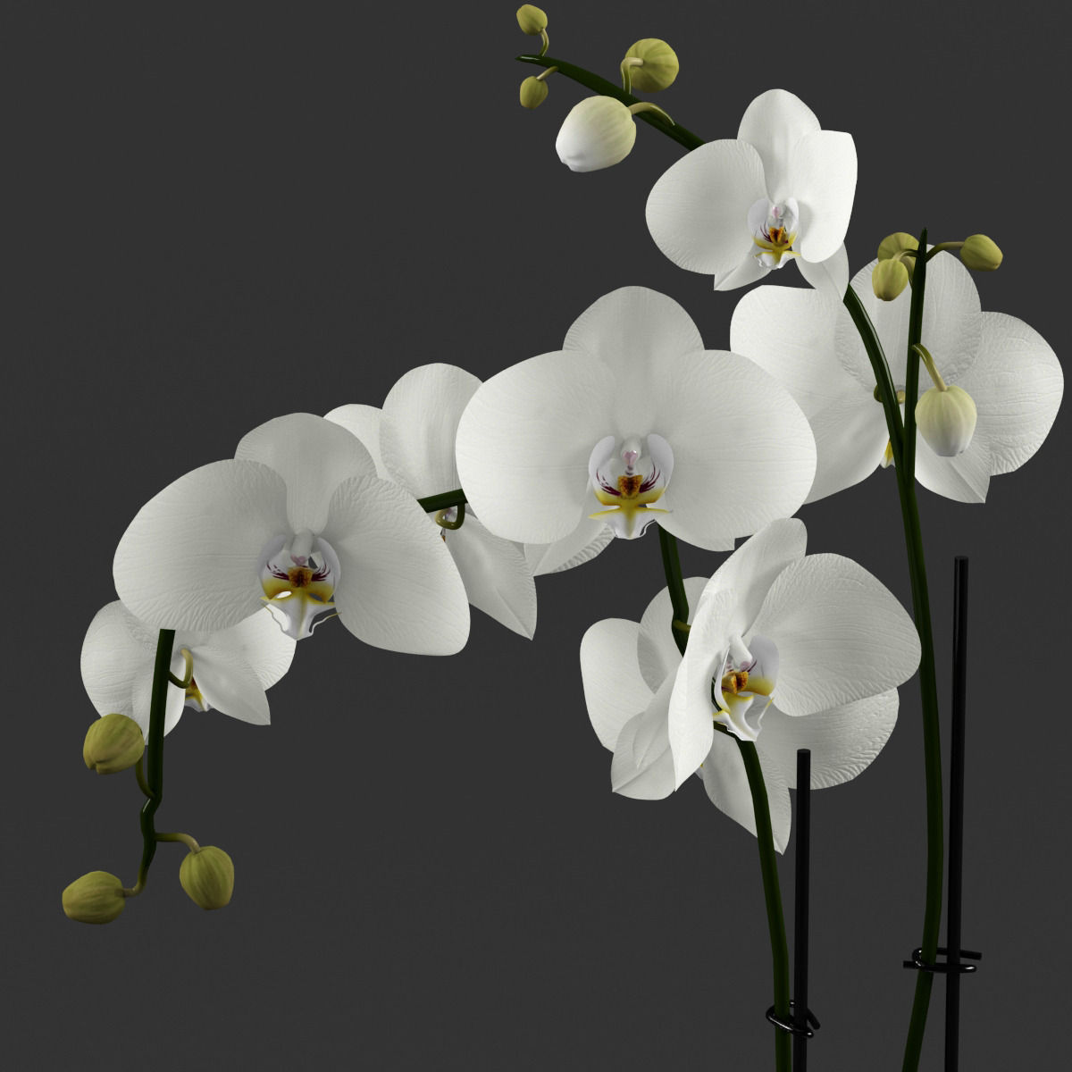 White orchid in glass pot with stones