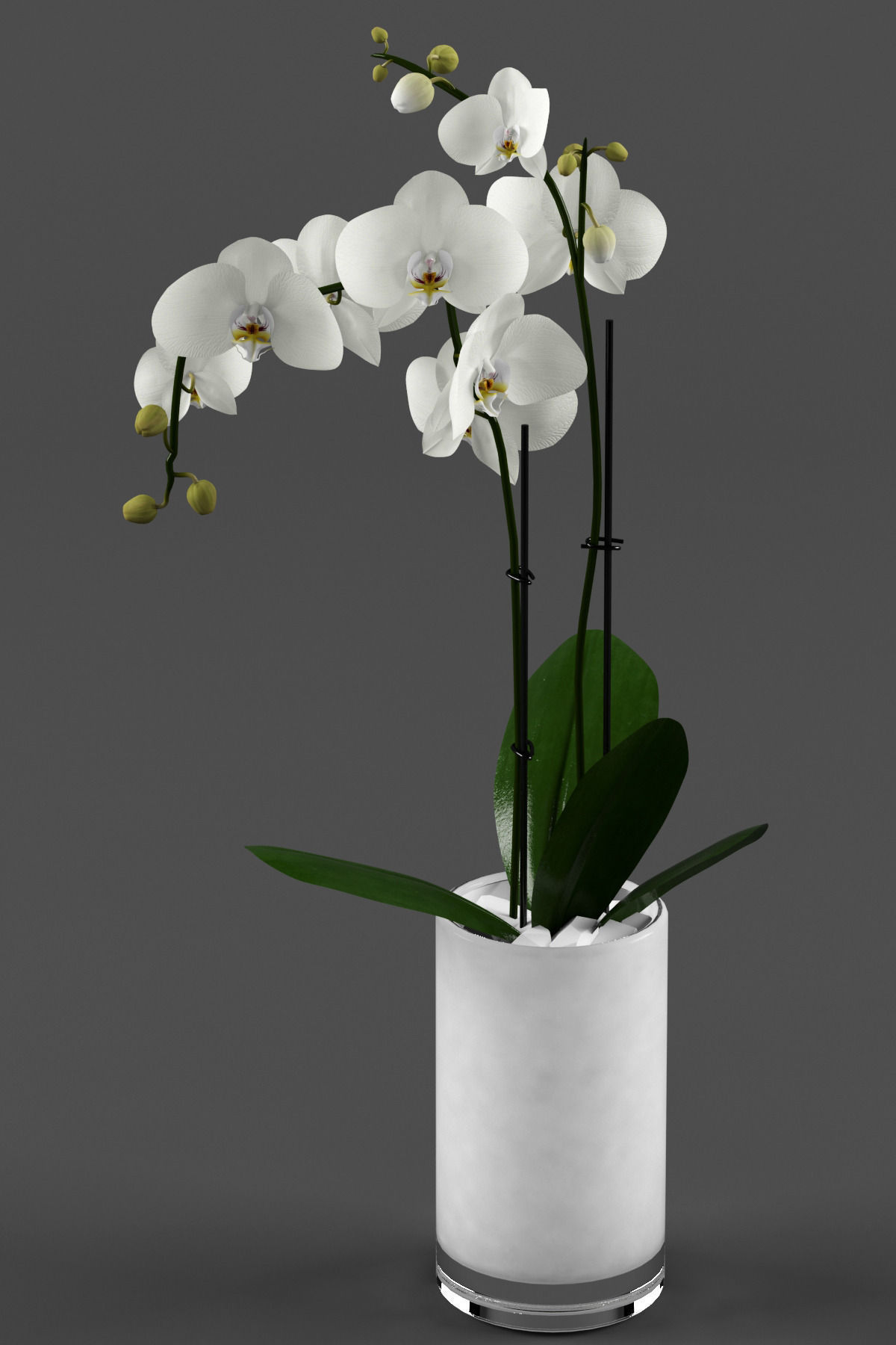White Orchid In Glass Pot With Stones 3d Model Max