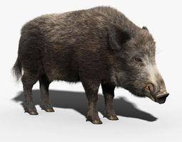 Wild Boar FUR 3D Model