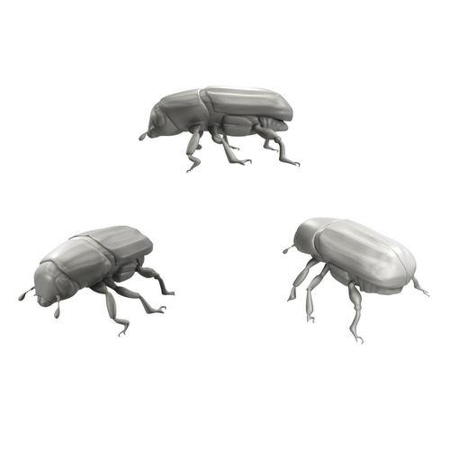 Realistic Beetle model3D model