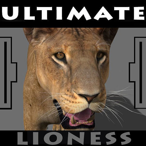 the ultimate lioness - 3d model 3d model rigged animated max obj fbx 1