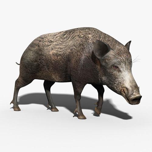 Wild Boar RIGGED3D model