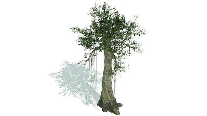 kapok tree 3d model fbx c4d tga 1