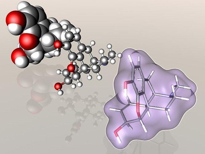 morphine molecule 3d model fbx c4d wrl wrz 1