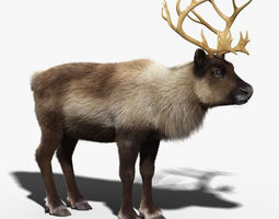 Reindeer FUR 3D Model