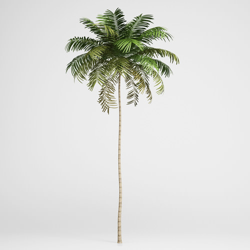 3d model CGAxis Areca Palm 01