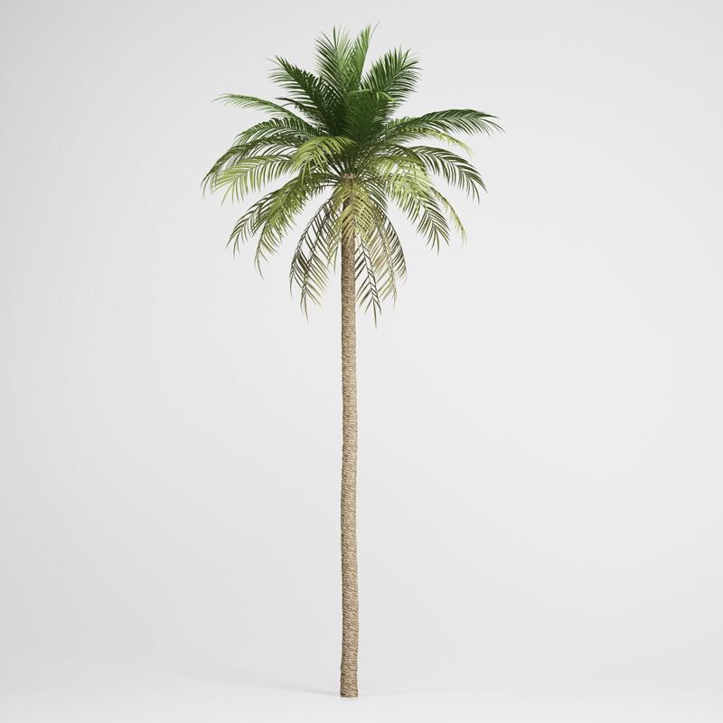 CGAxis Date Palm 03
