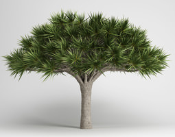 3D CGAxis Canary Islands Dragon Tree 13