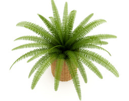 Fern in Wicker Basket 3D Model