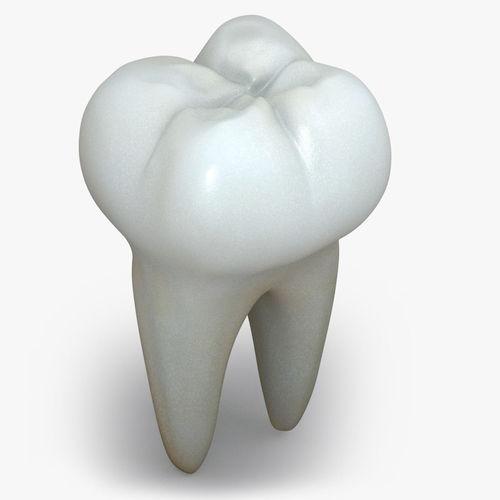Realistic Human Teeth3D model