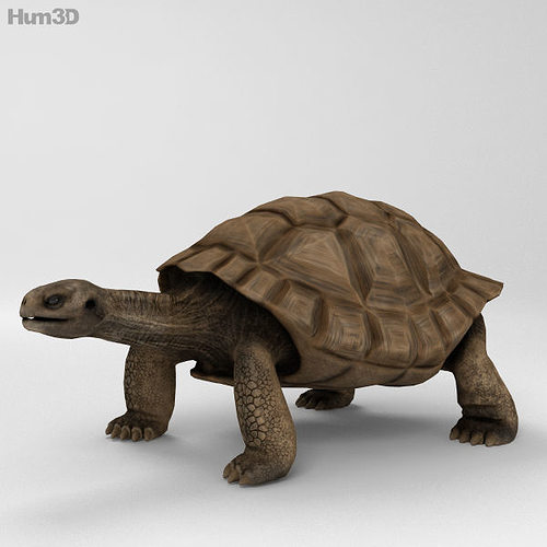 galapagos turtle high detailed 3d model max obj 3ds fbx c4d lwo lw lws 1