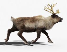Reindeer FUR ANIMATED 3D Model