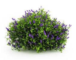 3d lilac syringa vulgaris