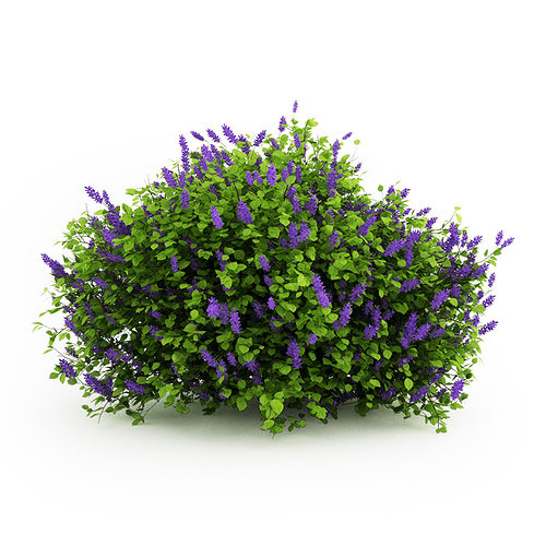 lilac syringa vulgaris 3d model max 1
