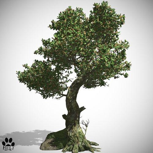 Kingsville Tree3D model