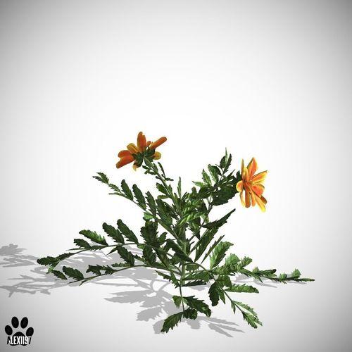Marigold flower3D model