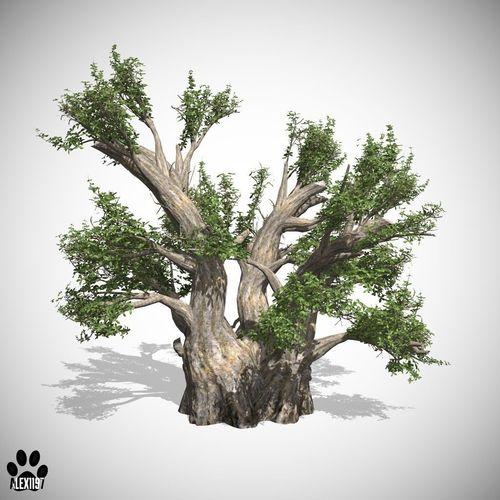 African Baobab Tree3D model