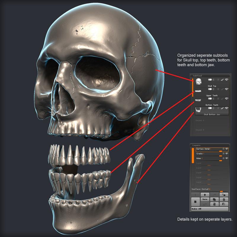 Skull 3D Model scary   CGTrader