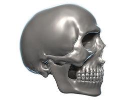 Skull 3D Model Zbrush OBJ 3D Model