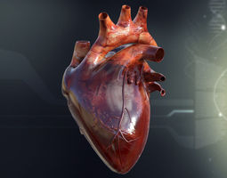 Human Heart Anatomy 3D Model