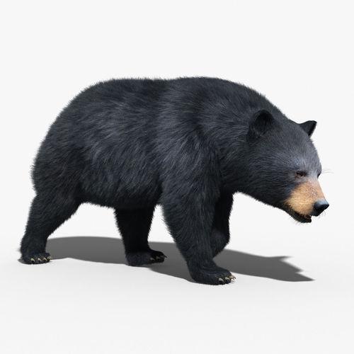 Black Bear FUR RIGGED3D model