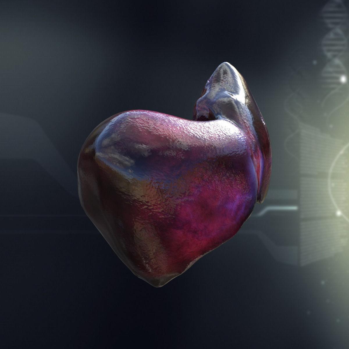 Human Liver Anatomy 3D Model .max .obj .3ds .fbx .c4d .lwo