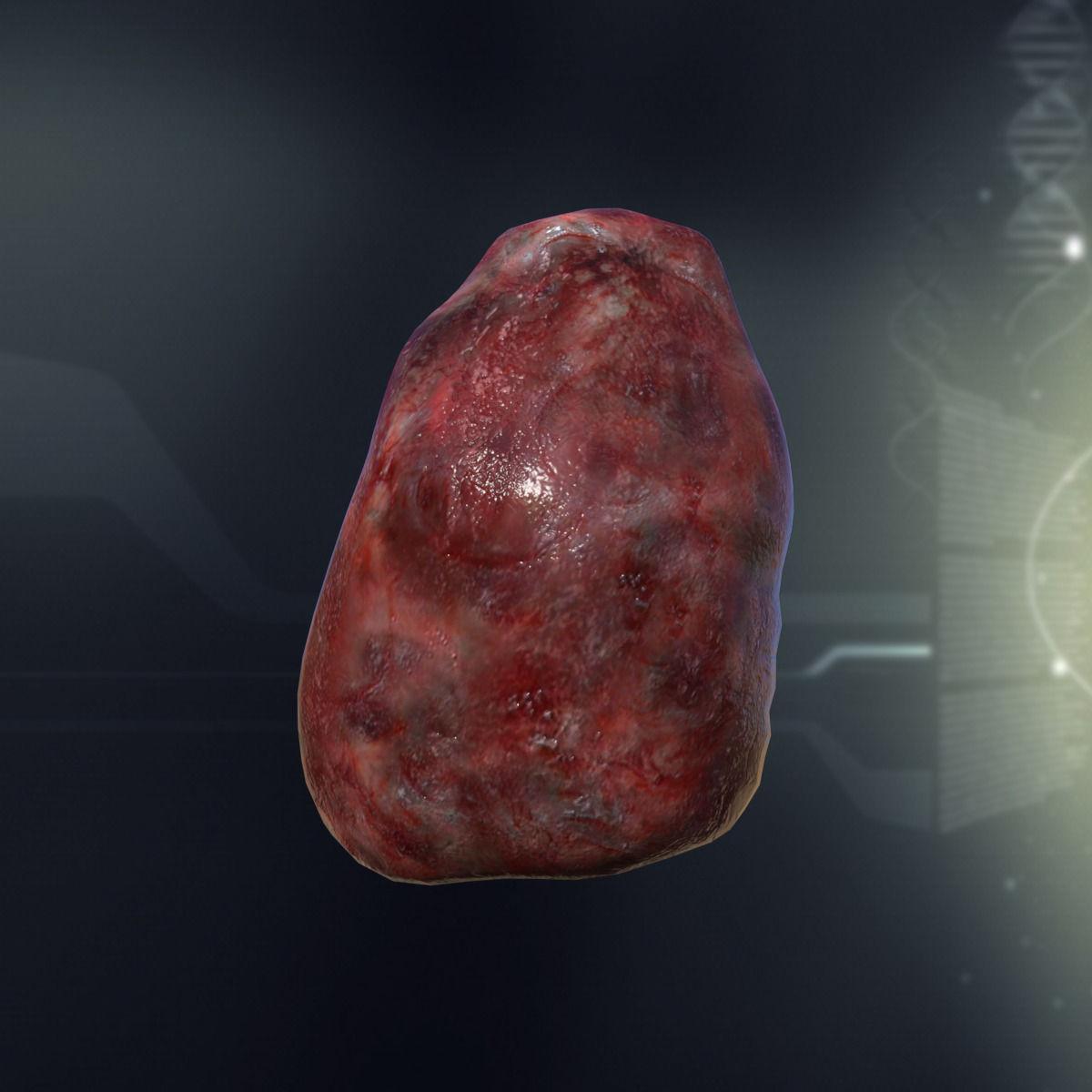 Human Spleen Anatomy 3D model   CGTrader