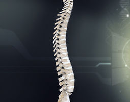 3D Human Spinal Anatomy