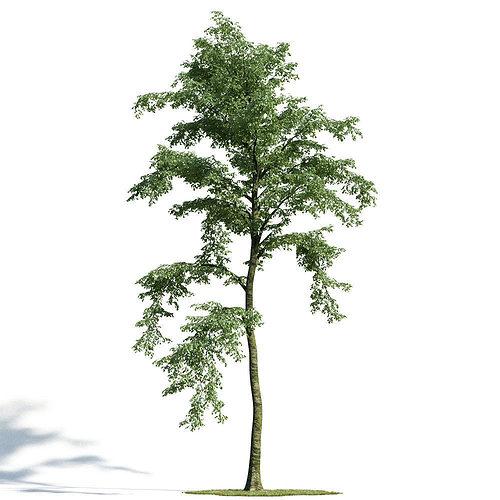 forest 24 am154 3d model obj mtl 1